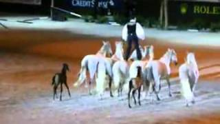 LORENZO Emotion Show with his mares and foals, GENEVA FINAL WORLD CUP 2010