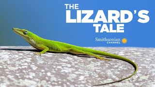 The Lizard's Tale 107: Anoles In The City