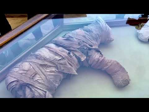 Exclusive Footage: Animal Mummies Cachette Discovered In Egypt