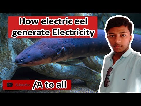 How electric eel genarate ELECTIRICITY Explained in HINDI