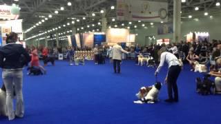 Выставка собак 2014 г. Крокус ЭКСПО.(В интернациональной выставке принимают участие свыше 10000 собак более 240 пород. Оценивают судьи из 23 стран..., 2014-11-08T17:56:15.000Z)