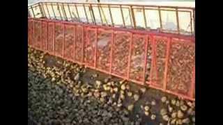 side dump truck unloading on beet piler