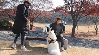 강아지는 낯선 사람이 가자고 하면 따라갈까?