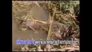แฟนเลือนสะเทือนใจ ไหมไทย