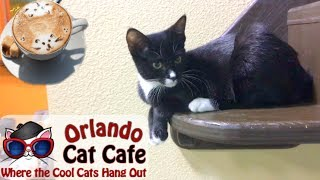 An Afternoon at the Cat Cafe Orlando - Axum Coffee | Nikki Stixx