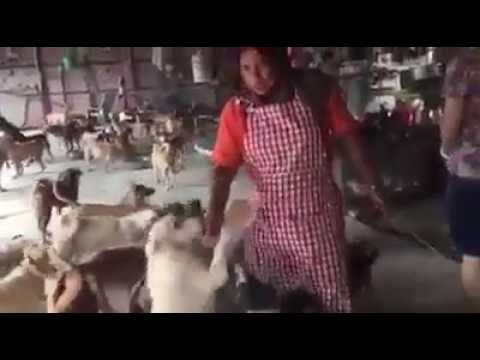 Muslim lady feeds over 500 strays dogs in Malaysia