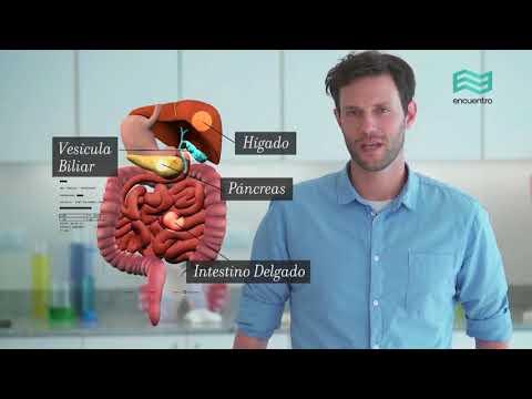 Sistema Digestivo Resumen