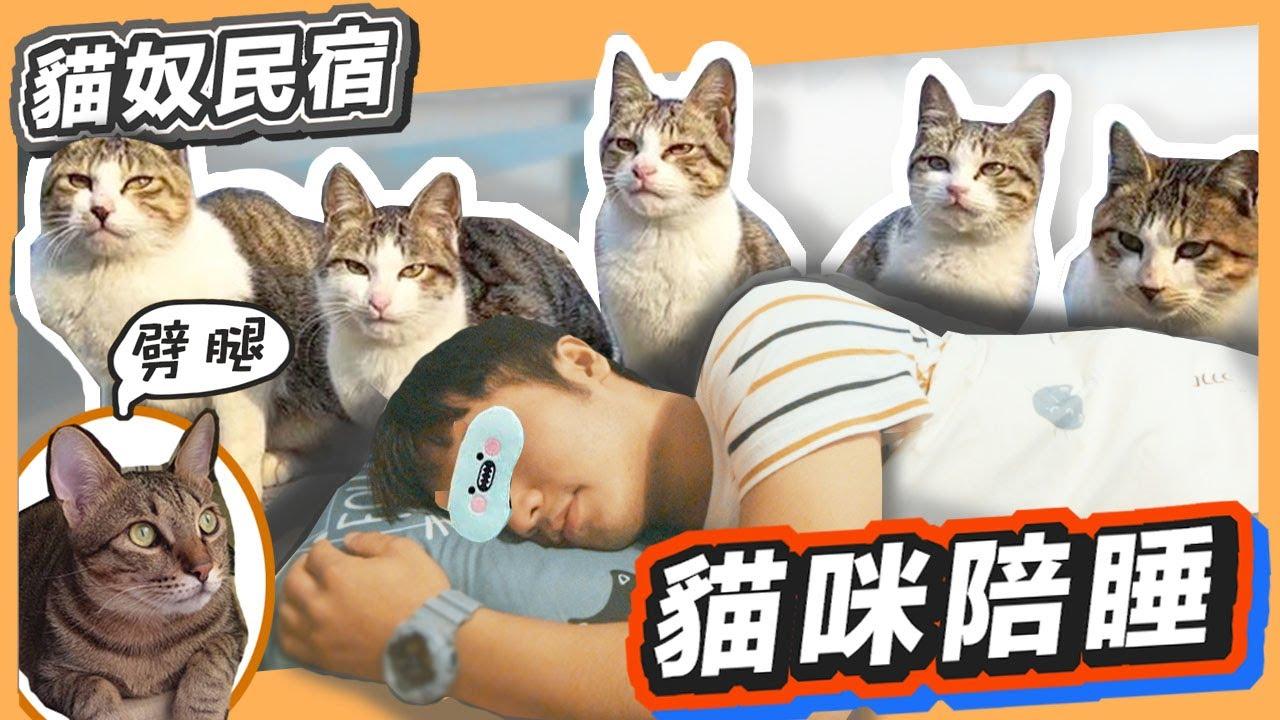 【Vlog】有貓陪睡の貓奴民宿 ft.喵仔間貓旅