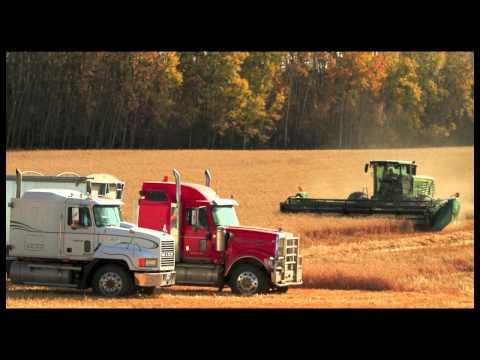 Good 2011 Grain Harvest Near Ponoka, Alberta