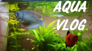 Mon AQUARIUM 80 litres (les plantes-les poissons) [AQUA VLOG]