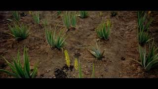 De la plante au produit jusqu'à nous