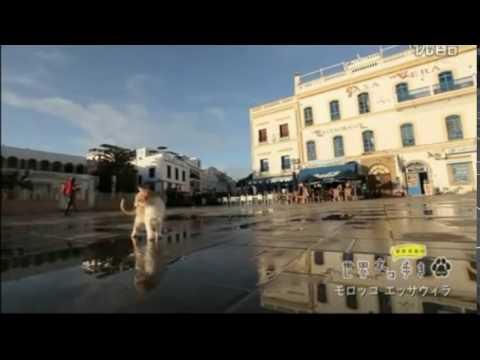【悶絶注意】可愛すぎる子猫がにゃー!in Morocco:Cute cat meows in Morocco