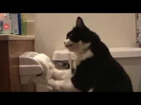 Boots vs  Toilet Paper (Funny Cat)