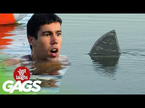 Shark Attack!! - Just For Laughs Gags