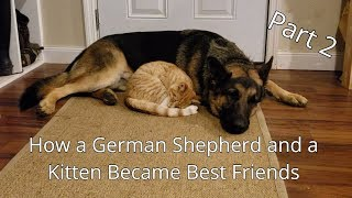 How a German Shepherd and a Kitten Became Best Friends (Part 2)