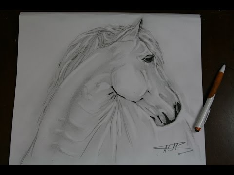 Dessin Rapide Cheval Original Noir Et Blanc A La Mine Youtube