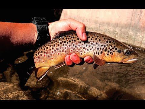 W4f fly fishing spring creek pa take 2 youtube for Spring creek pa fishing report