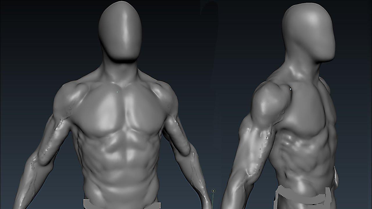 Blender Anatomy Sculpting (1hr timelapse) - YouTube