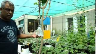 Simplified Hydroponics India