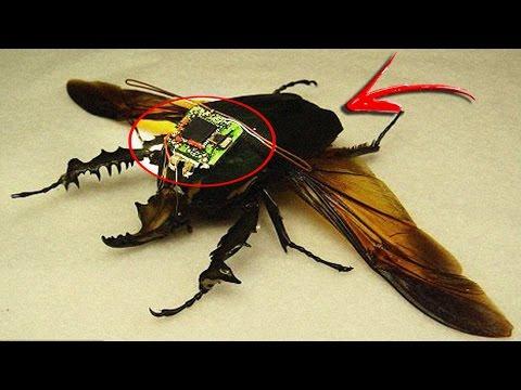 Este Insecto será el Futuro de la Guerra