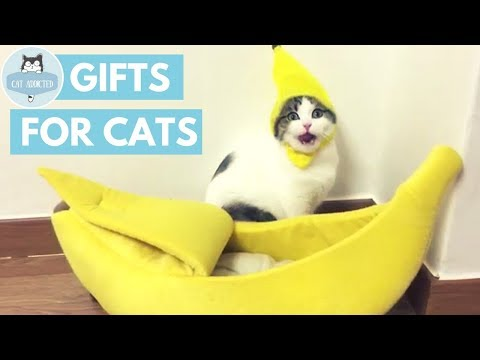 10 Cool Gifts Your Cat Wants
