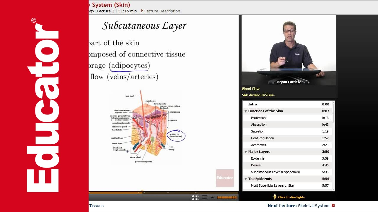 Integumentary System - YouTube