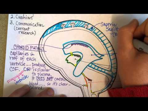 Cerebrospinal Fluid And Ventricles, Part 2