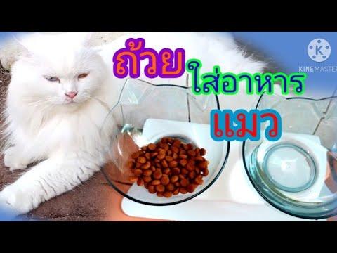 รีวิวถ้วยใส่อาหารแมว Review of the beloved cat food cupcatfoodcupถ้วยใส่อาหารแมว