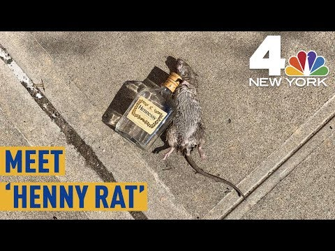 JC Floyd - EVEN THE RATS PARTY HARD IN NYC