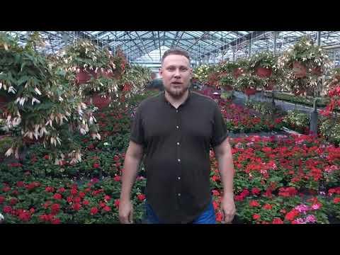 Цветы в горшках купить Москва