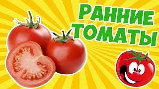 видео Пикировка рассады томатов ранних сортов. Сорта томатов. Посадки 2012.
