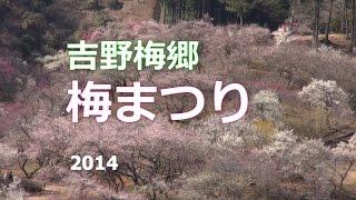 吉野梅郷 「梅まつり 2014」