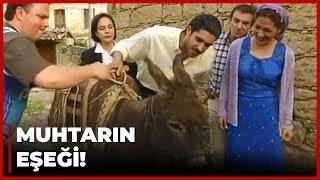 Erkan Ağa, Zeyno ve Memoli'yi BİRLİKTE Gördü - Yılan Hikayesi 34. Bölüm
