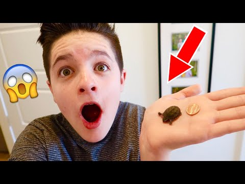Buying A BABY TURTLE Online! | Brock And Boston