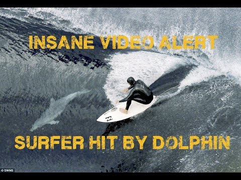 Surfer nailed by dolphin