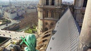 Notre Dame de Paris : A l'ombre des tours de la cathédrale