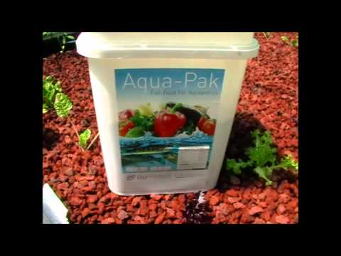 Aquaponic Fish Food, Best Type And Price For Australian Native Fish