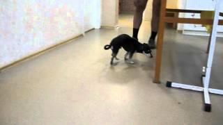 Баффи 2 мес после операции — Ветеринарная клиника
