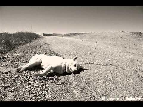 JOSE LARRALDE- Un perro muerto nomas
