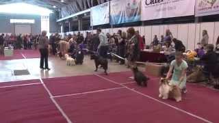 Выставка собак всех пород ранга САС, ЧФ «ЖЕМЧУЖИНА САМАРЫ-2015» Самара 29 марта 2015