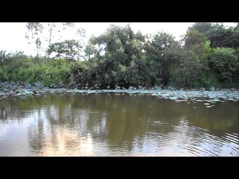 Hồ sen Đầm Long
