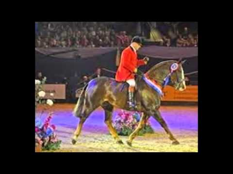 horse vitamin and mineral requirements Supreme Horse (435)770-1167