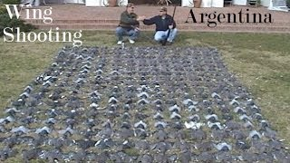 Argentina wing shooting Dove & Pigeon hunt we shot these in 1 hour see how we set up & wingshoot POV