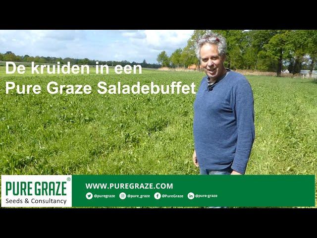 De kruiden in een Pure Graze Saladebuffet l kruidenrijke grasland-mengsels