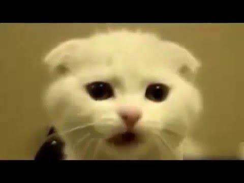 Funny Dog and Cat Dancing and Singing in World