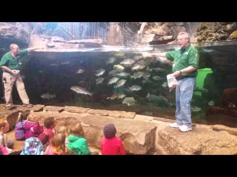 Bass Pro Feed Fish Tank