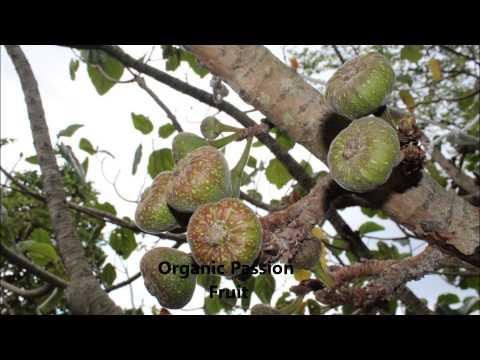 Rise Of The Organics