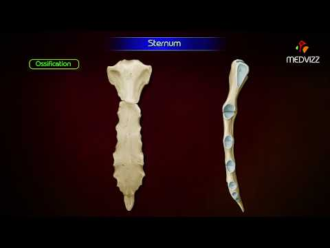 Sternum Anatomy ( Osteology ) Animation - Parts , Location , Attachments And Clinical Correlation
