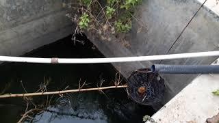 Venomous snake - Cobra rescue from Concrete tub snake rescue team Panchet dam(N G O)