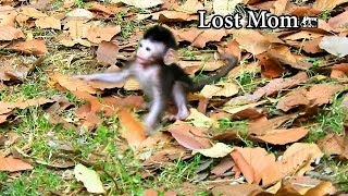 New baby Jayden Sit sit turn back lost mom| Jayden show action scare when not see mom stay near